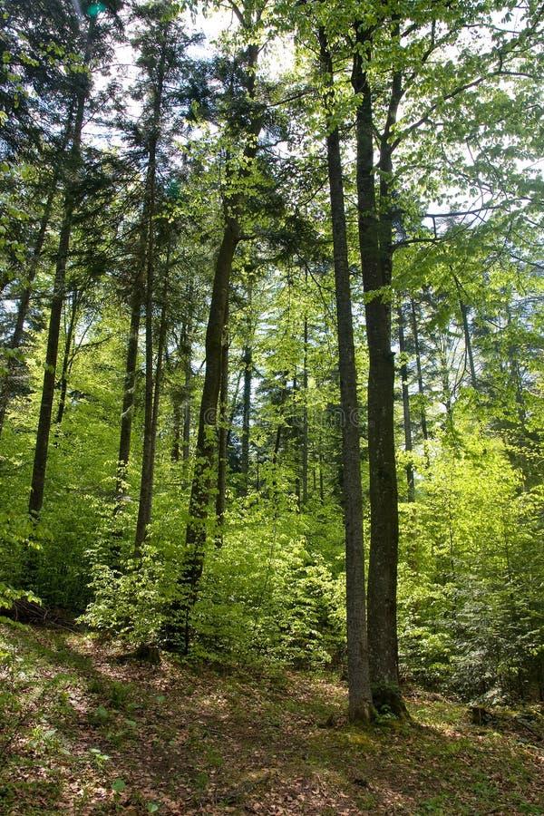 De vegetatie van de berg royalty-vrije stock foto's