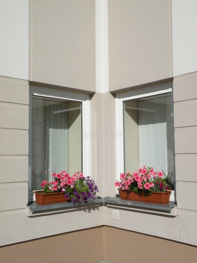 De vensters van bloemen royalty-vrije stock foto