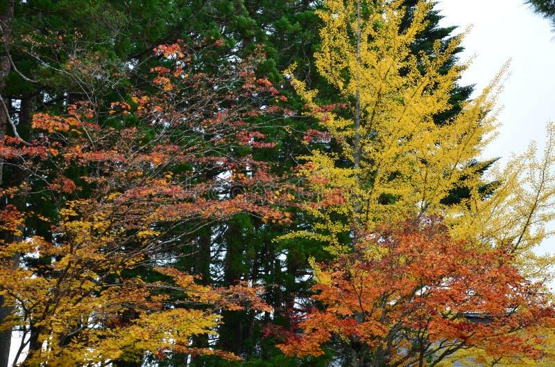 De verandering Japan van de de herfst rode kleur stock afbeeldingen
