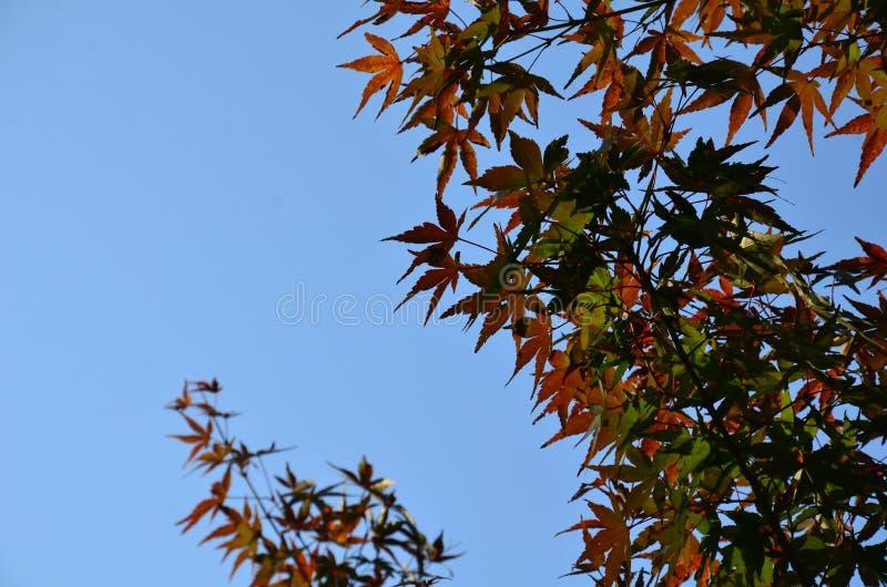 De verandering Japan van de de herfstkleur stock foto's