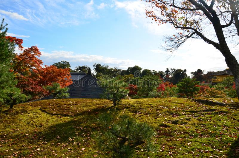 De verandering van de bladerenkleur in Japan stock fotografie