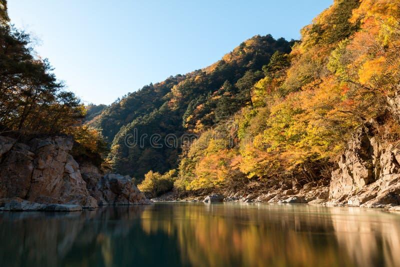 De verandering van de bladkleur in de Herfst van Japan bij Ryuokyo-Canion royalty-vrije stock foto's