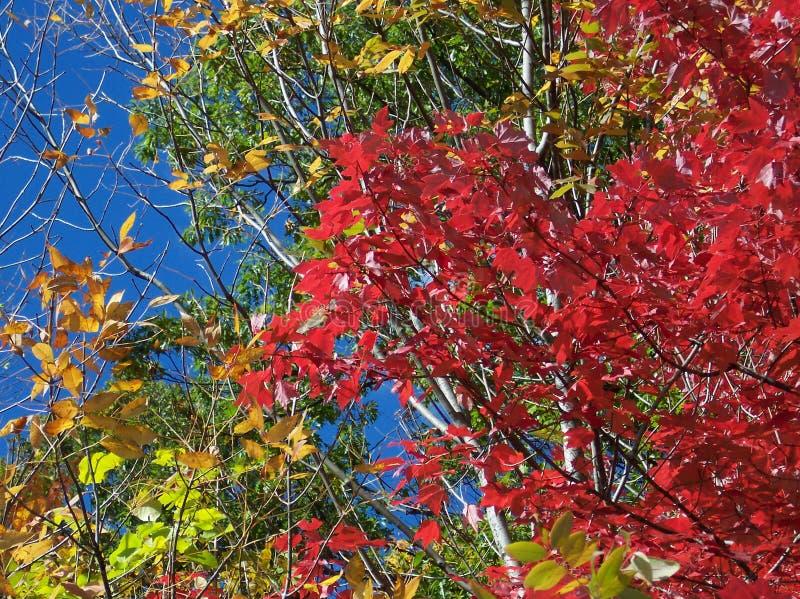 Download De Verandering Van De Kleur In De Herfst Stock Foto - Afbeelding bestaande uit bladeren, takken: 286120