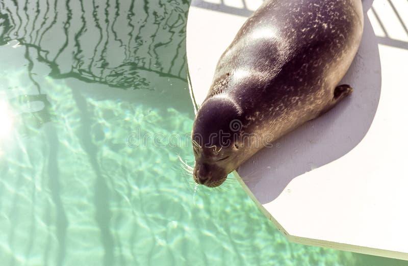 De verbinding neemt zon bij het aquarium van Quebec royalty-vrije stock afbeeldingen