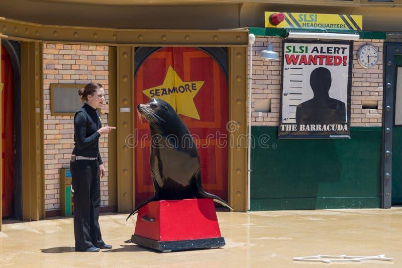 De verbindingstrainer presteert op stadium met zeeleeuw tijdens een show bij San Diego Sea World in Californië stock afbeelding