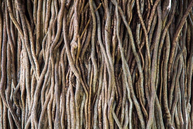De verdraaide tropische achtergrond van boomwortels royalty-vrije stock foto's