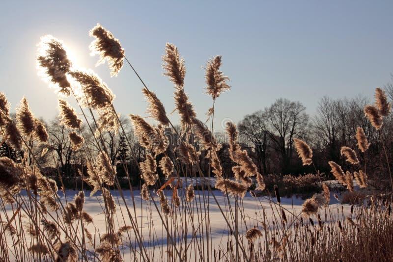 De Verduistering van de Bloem van de winter royalty-vrije stock afbeelding
