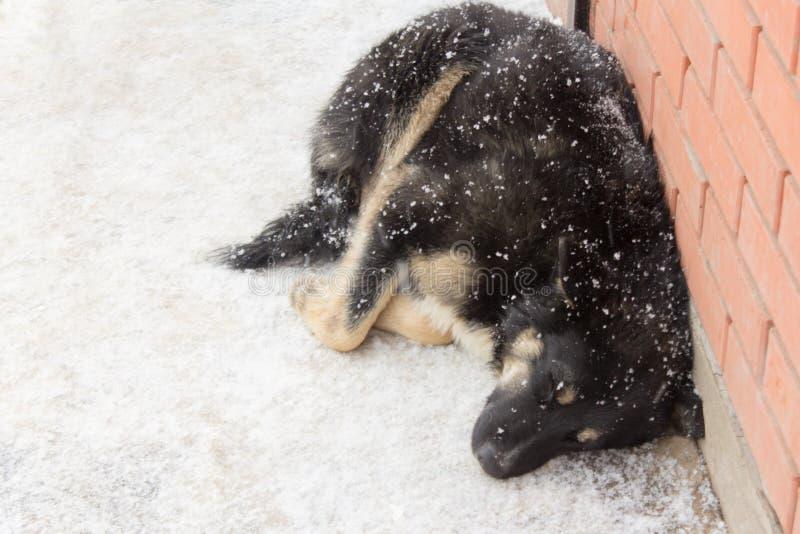 De verdwaalde hond bevriest in de winter in de koude royalty-vrije stock foto's