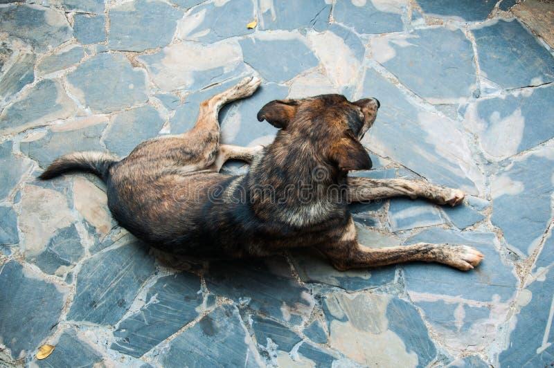 De verdwaalde hond in straat stock foto