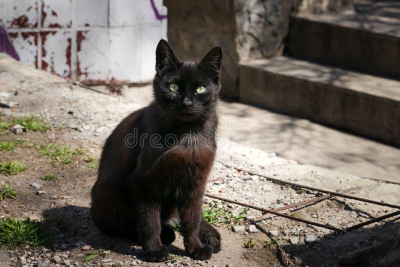 De verdwaalde zwarte kat zit in de binnenplaats Mystieke zwarte kat met groene ogen Donkerbruine straatkat in een verlaten plaats royalty-vrije stock foto
