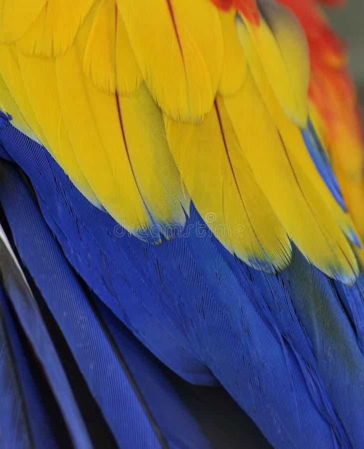 De Veren van de papegaai stock afbeeldingen