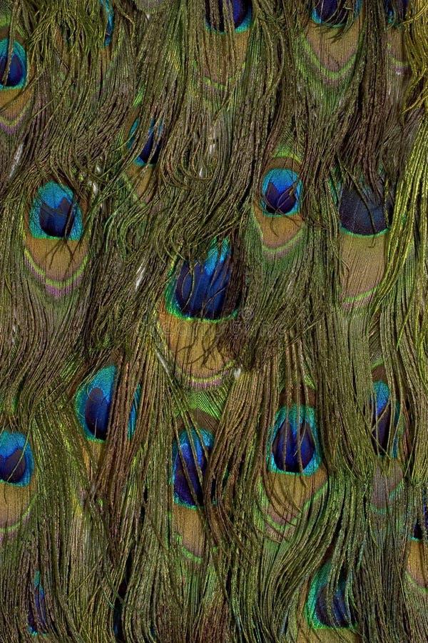 De veren van de pauw royalty-vrije stock afbeeldingen