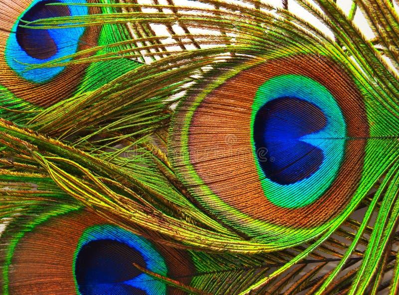 De veren van een pauw sluiten omhoog royalty-vrije stock foto