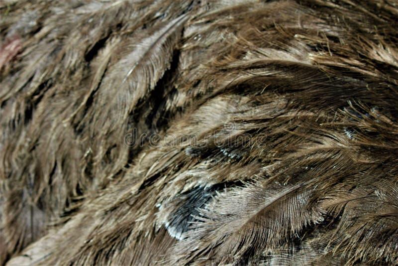 De veren van een struisvogel royalty-vrije stock foto's