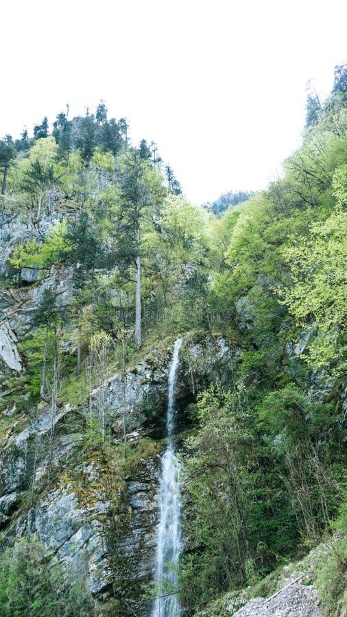 De verfrissende waterval die onderaan mos stromen behandelde bruine stenen in een mooi groen bos in Montenegro Cinematicschot stock fotografie