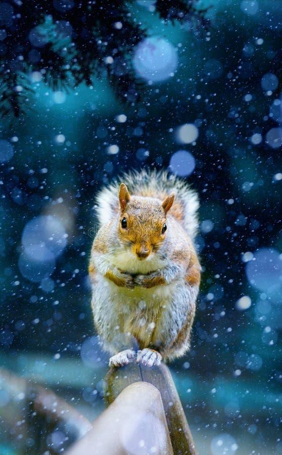 De verfrissingen die van de Kerstmiseekhoorn op een bank in H van Londen wachten stock foto's