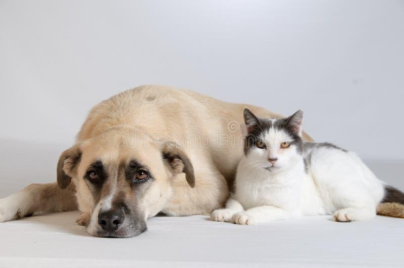 De Verhouding van de hond en van de Kat stock afbeelding