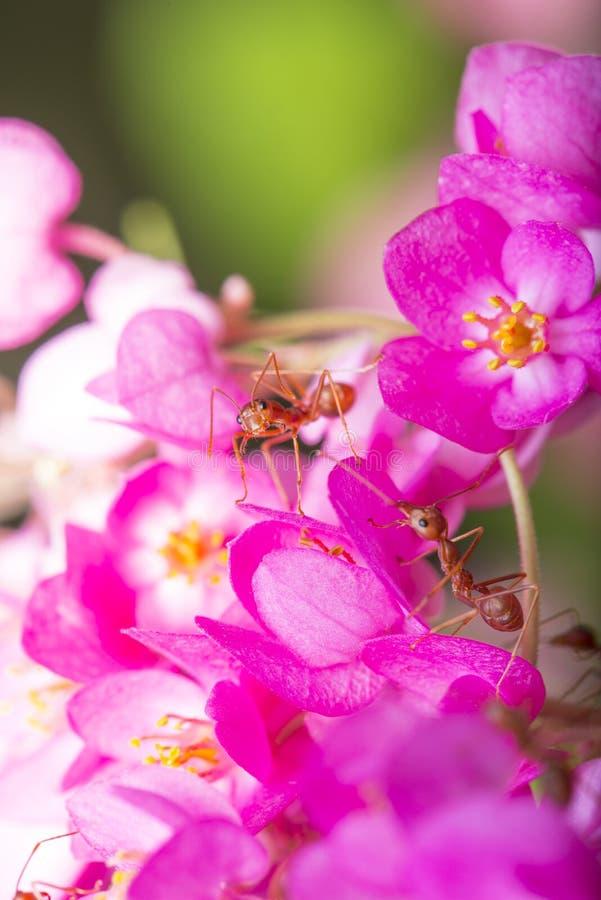 De Verhouding van het insect en van de Bloem stock foto's