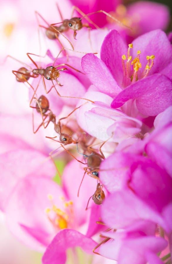 De Verhouding van het insect en van de Bloem stock fotografie