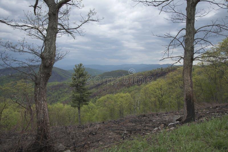 De verkoolde bomen merken de rand van een vernietigende brand stock foto
