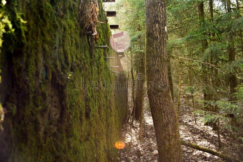 De verlaten bouw in hout stock afbeelding