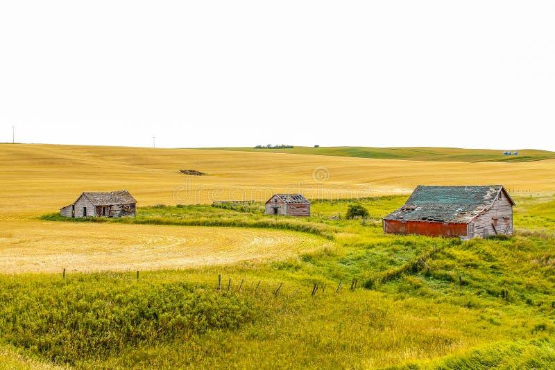 De verlaten Provincie van Wheatland van landbouwbedrijfgebouwen stock afbeeldingen