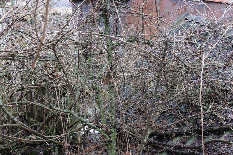 De verlaten tuin Overwoekerde druiven De wijnstok in het mos Een tuin met een vat voor het water geven Oude tuin royalty-vrije stock fotografie