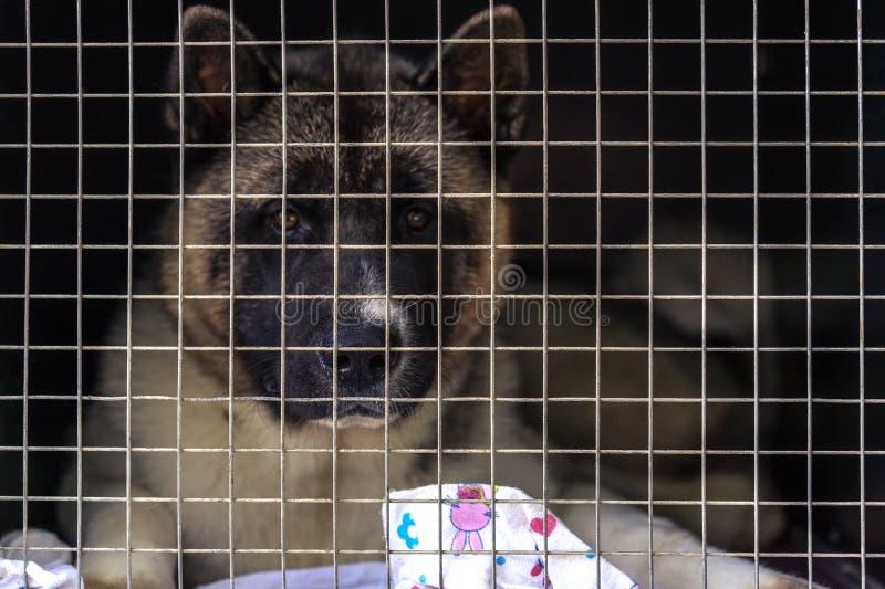 De verloren hond zit in een kooi achter een rooster in verwachting van de nieuwe eigenaar Schuilplaats voor verdwaalde honden stock afbeelding