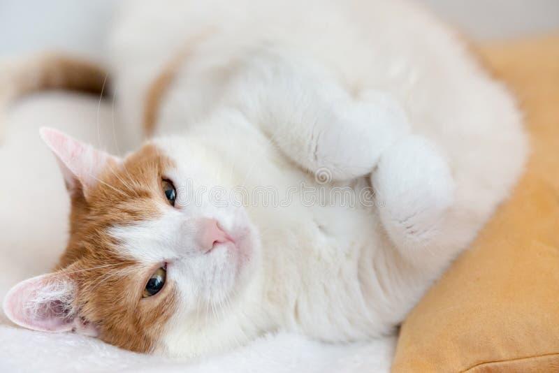 De vermoeide rust van de gemberkat op bed en het kijken met geknepen ogen royalty-vrije stock foto