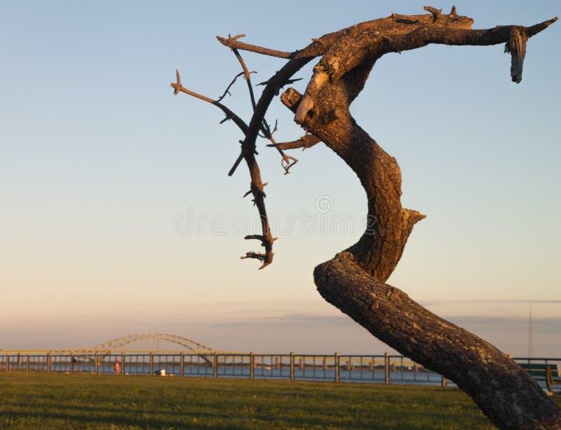 De vernietigde oude wacht van boomtribunes bij het strand bij schemer royalty-vrije stock fotografie