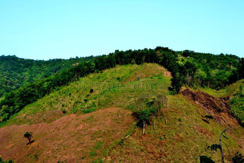 De vernietiging van het regenwoud in Thailand royalty-vrije stock afbeelding