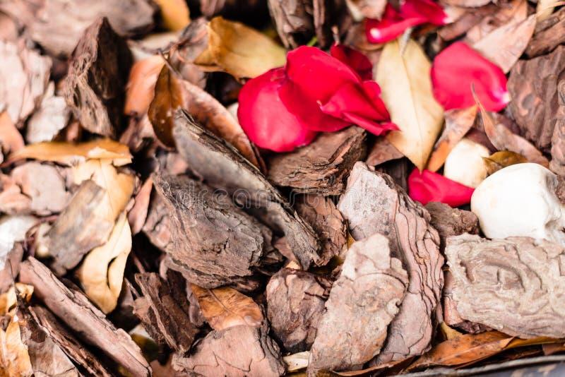 De verpletterde de textuurachtergrond van de boomschors met de herfstbladeren, kiezelstenen en rood nam bloemblaadjes voor het me stock fotografie