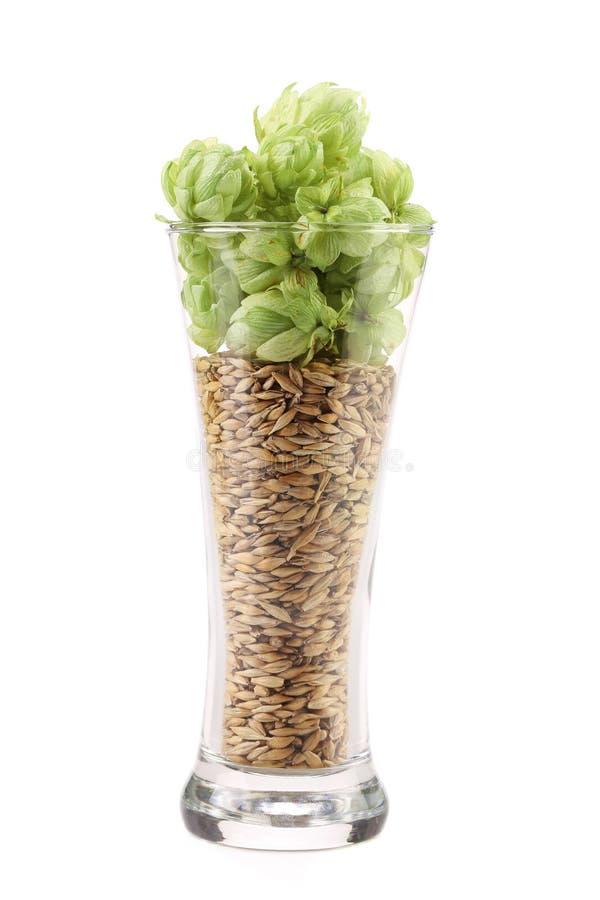 De verre grand complètement des grains et de l'houblon. photos stock