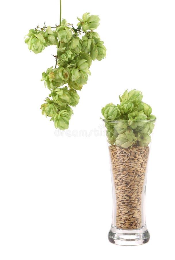 De verre grand complètement des grains et de l'houblon. photographie stock libre de droits