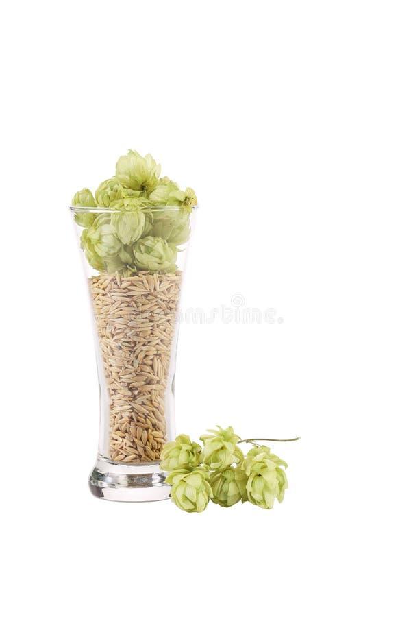 De verre grand complètement des grains et de l'houblon photos stock