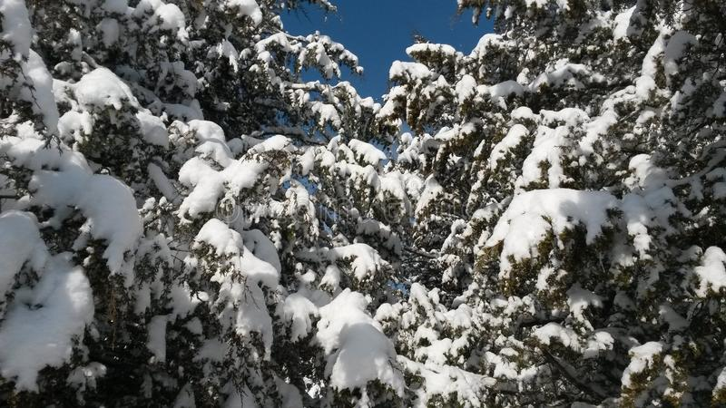 De Verrukking van de de wintertijd in het Hout royalty-vrije stock fotografie