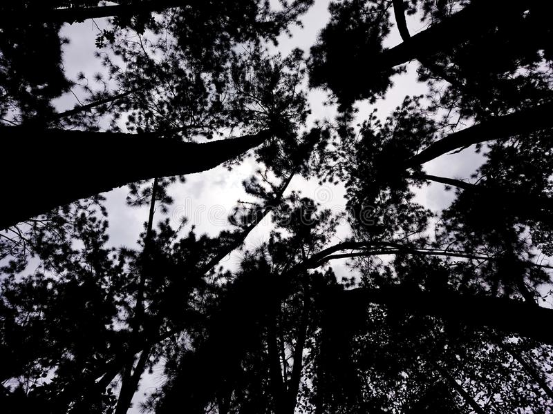 De Verrukte Bomen wat betreft de Hemel stock foto's