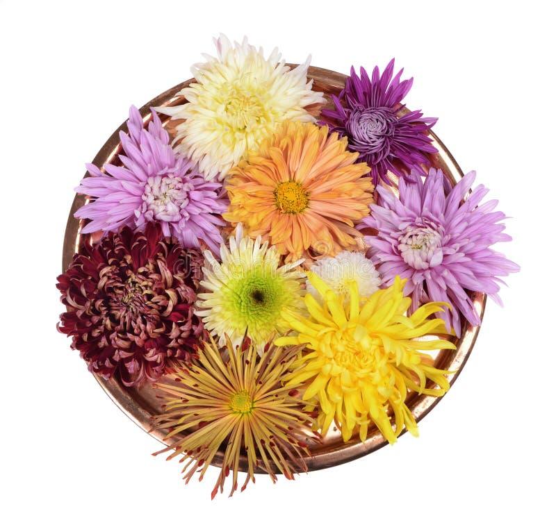 De verschillende bloem van kleurenchrysanten stock foto's