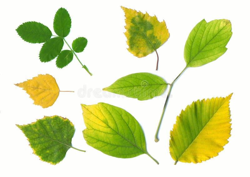 De verschillende gele bladeren van de herfst royalty-vrije stock foto
