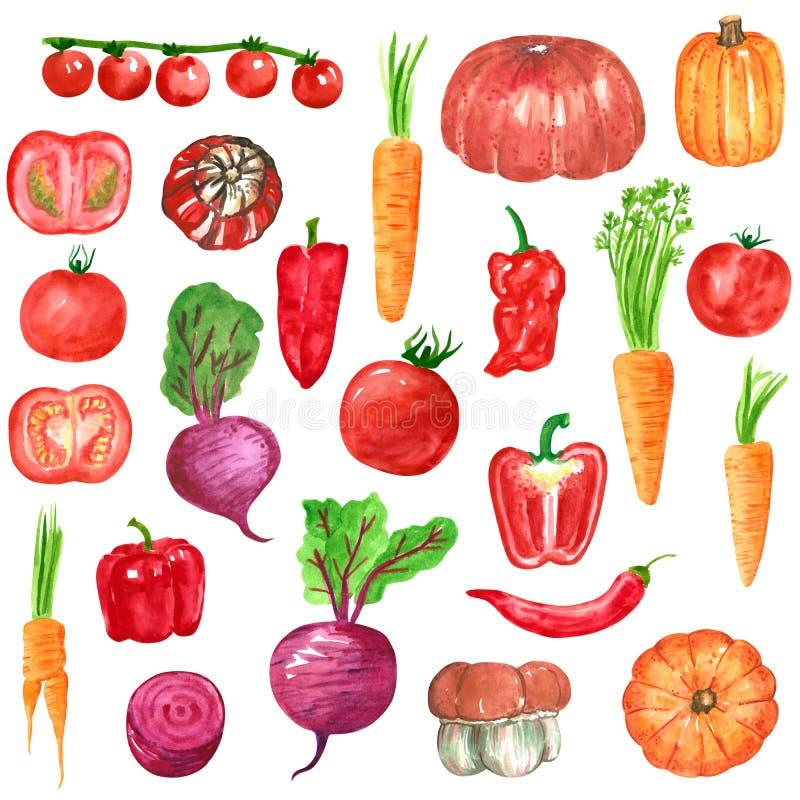 De verschillende rode, oranje, purpere groenten clipart plaatsen, pompoen, wortel, tomaat, bieten, peper vector illustratie