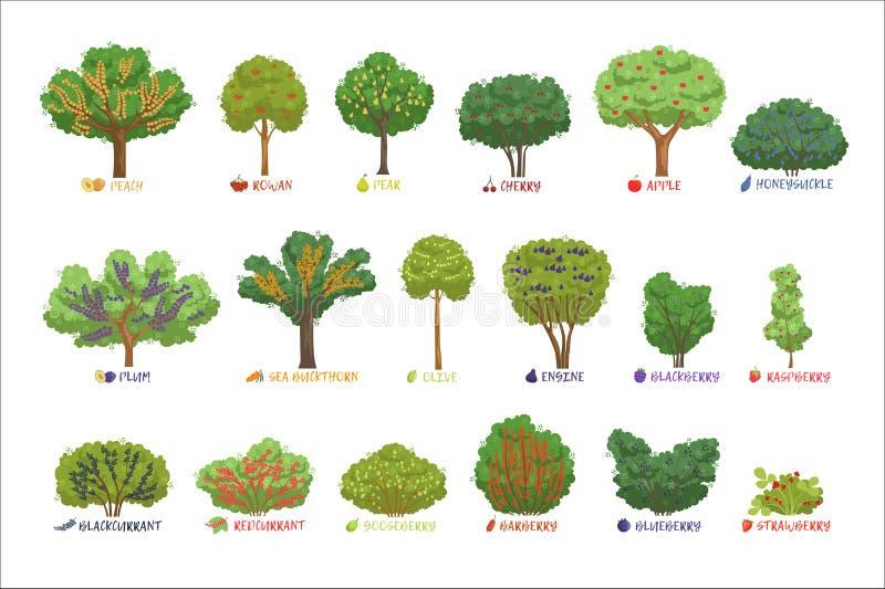 De verschillende struiken van de tuinbes sorteert met geplaatste namen, ringen de de fruitbomen en bes vectorillustraties royalty-vrije illustratie