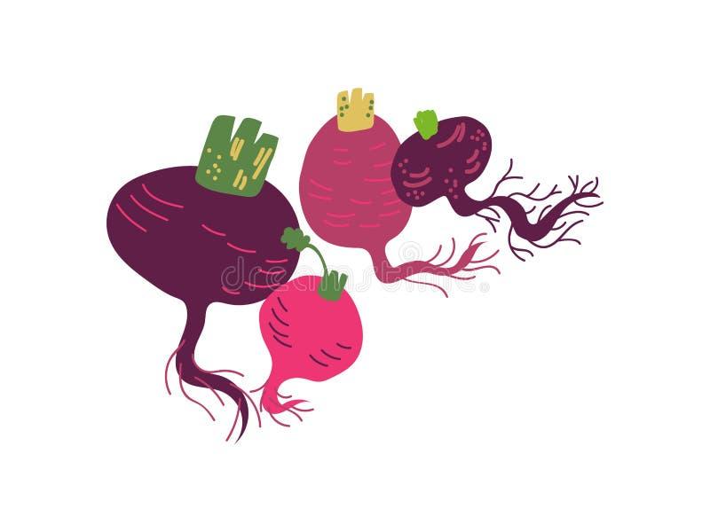 De verschillende Verse Groente van Bietenverscheidenheden, Organisch Voedzaam Vegetarisch Voedsel voor Gezonde voeding Vectorillu vector illustratie
