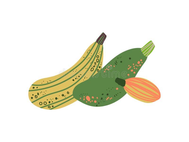 De verschillende Verse Groente van Courgetteverscheidenheden, Organisch Voedzaam Vegetarisch Voedsel voor Gezonde voeding Vectori vector illustratie