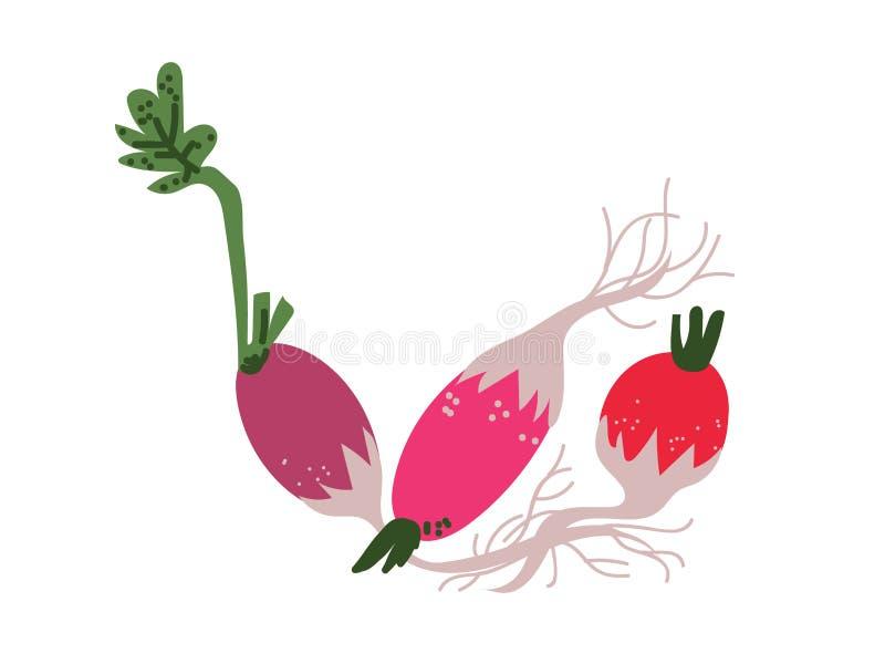 De verschillende Verse Groente van Radijsverscheidenheden, Organisch Voedzaam Vegetarisch Voedsel voor Gezonde voeding Vectorillu stock illustratie