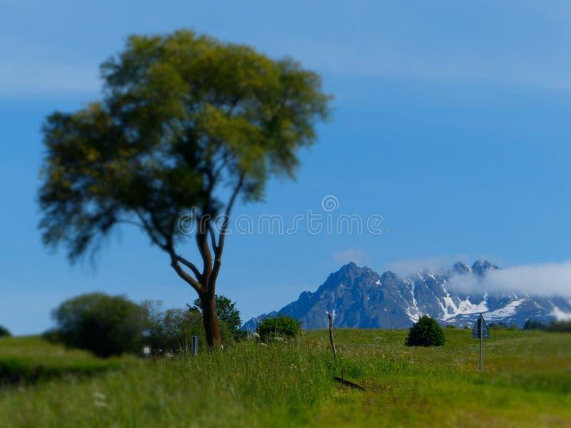De verschuiving van de de boomschuine stand van alpen royalty-vrije stock afbeeldingen
