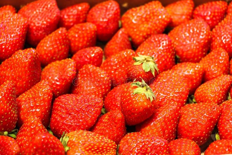 De verse aardbeien worden gezet in een doos na het oogsten en te koop aangeboden royalty-vrije stock foto