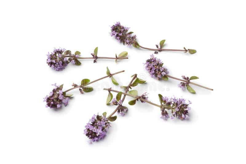 De verse bloemen van de oregothyme stock afbeeldingen