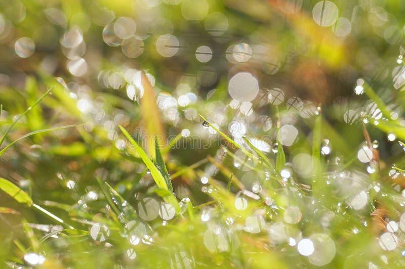 De verse dalingen van de ochtenddauw op het gras beeld stock foto's