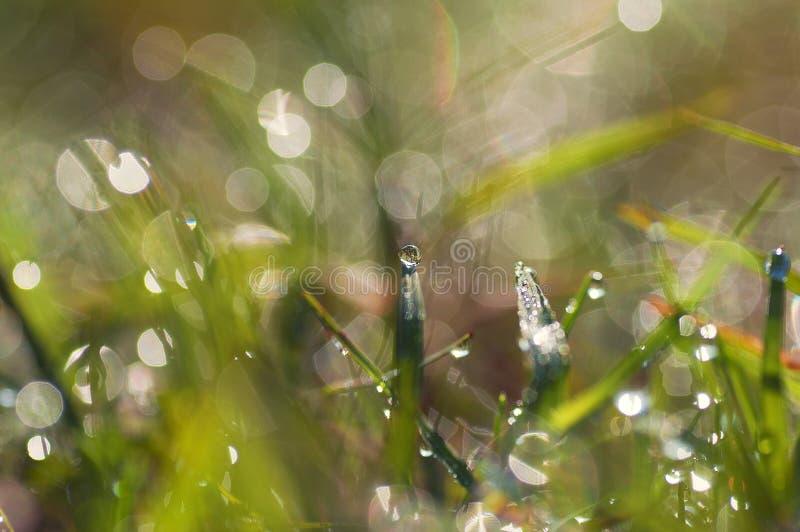 De verse dalingen van de ochtenddauw op het gras beeld royalty-vrije stock afbeeldingen