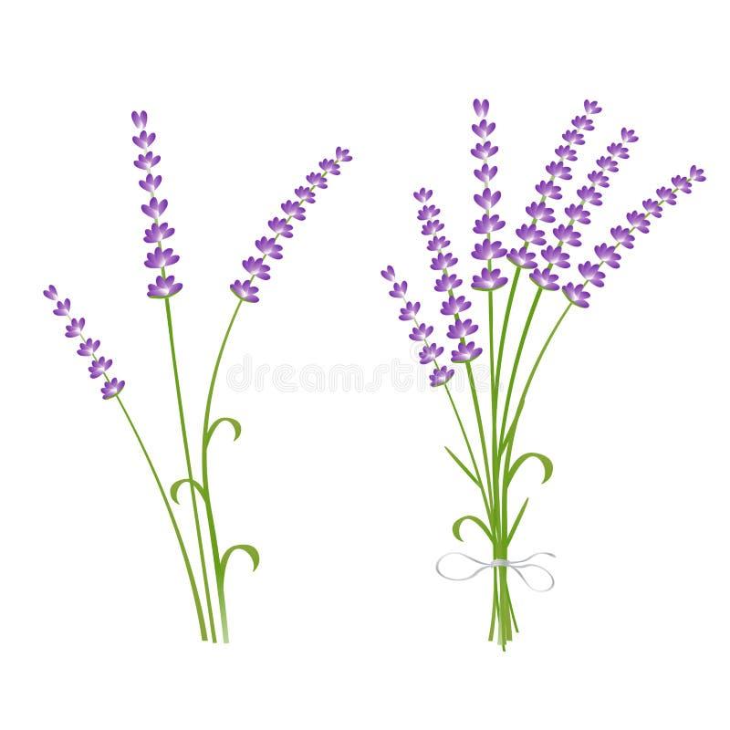 De verse de installatiebloemen van de besnoeiings geurige lavendel bundelen en kiezen 2 realistische pictogrammen geplaatst geïso stock illustratie